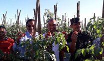 Bupati Manggarai: Sektor Pertanian dan Hortikultura Tetap Jadi Prioritas
