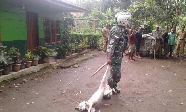 Tikor Rabies Eliminasi Anjing di Langke Rembong