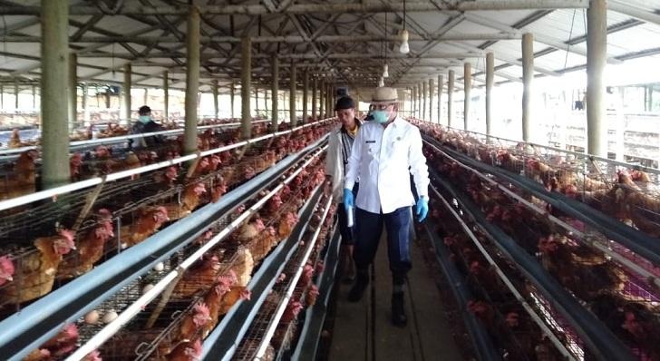 Disebut Mencemarkan Lingkungan, Bupati Deno Sidak Lokasi Ternak Ayam Petelur di Mena